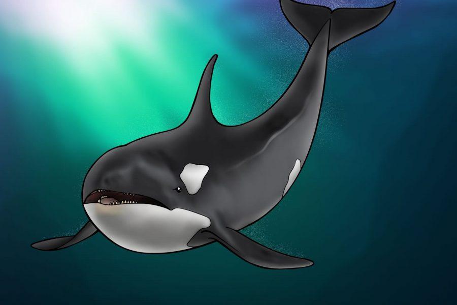 Speelse orka's in Spanje
