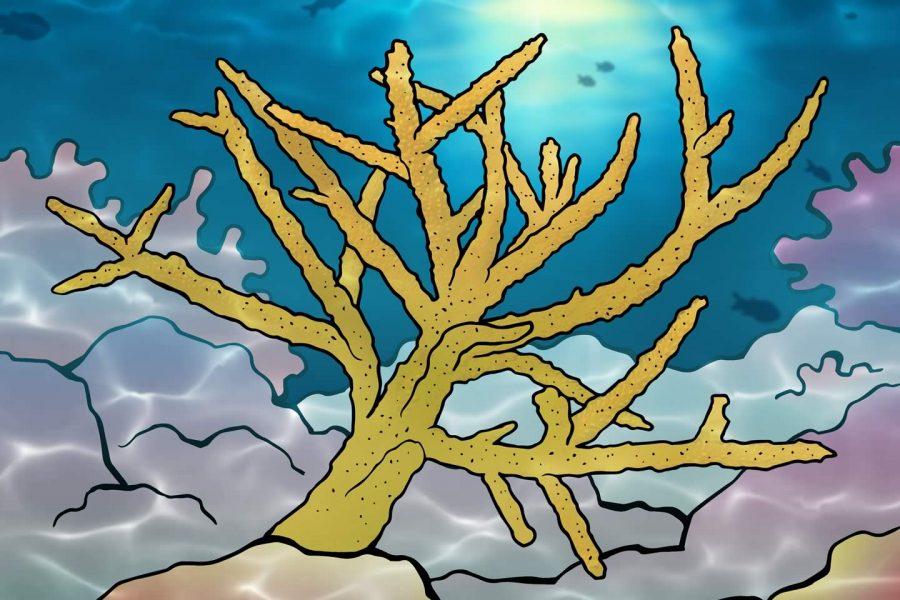 Staghorn koraal