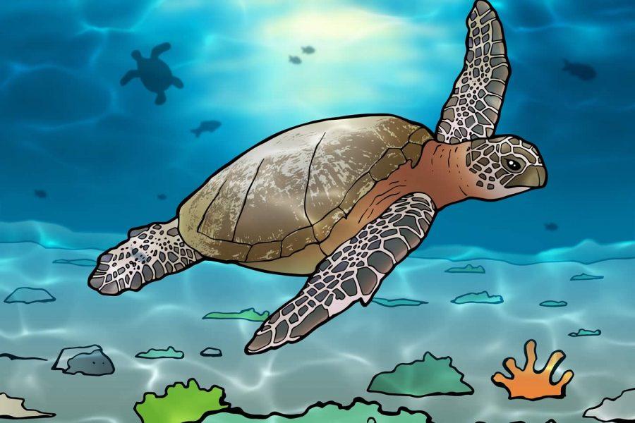 Meer zeeschildpadden op Bonaire