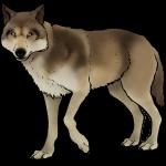 Tweede wolf op Zuid-Veluwe